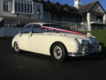 Old English White Jaguar Mark 2